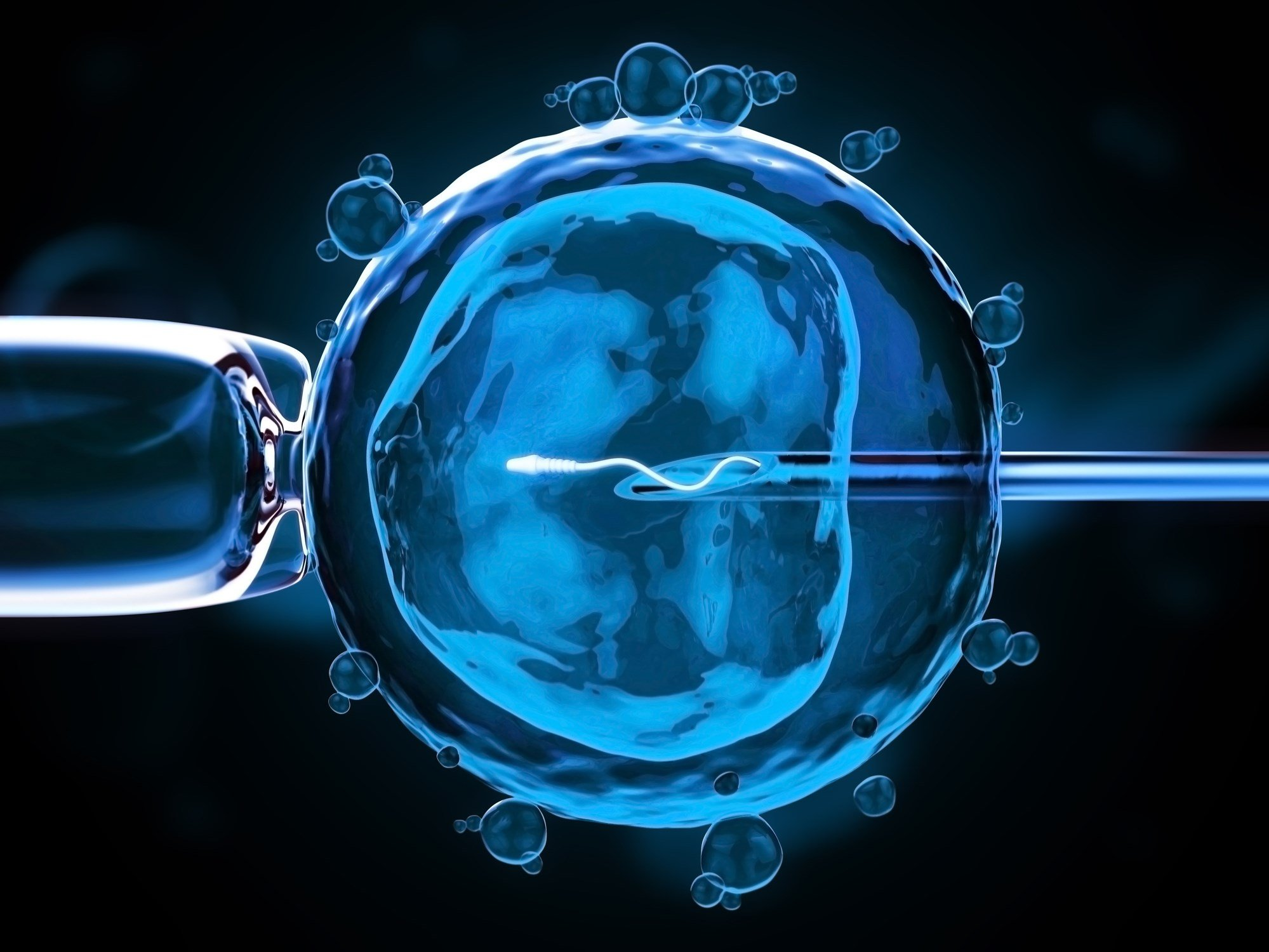 A human stem cell inserted into an embryo