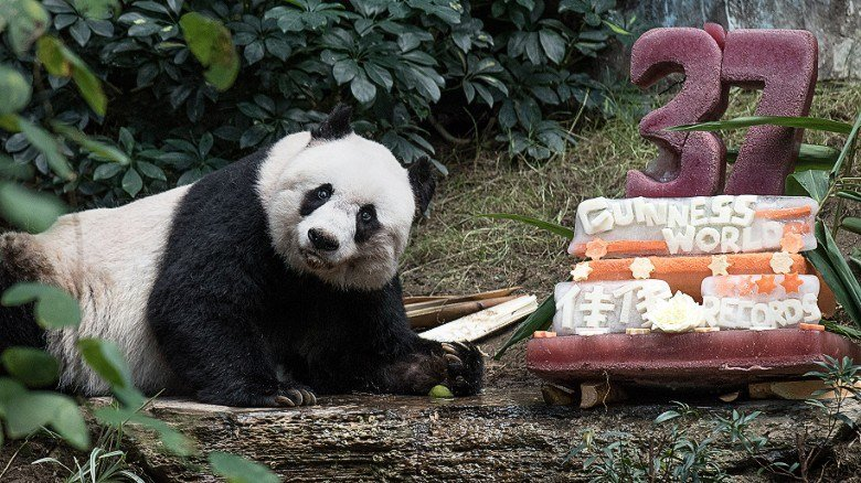 World's oldest giant panda dies