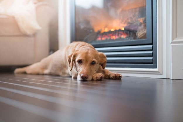 dog lying on floor next to fireplace