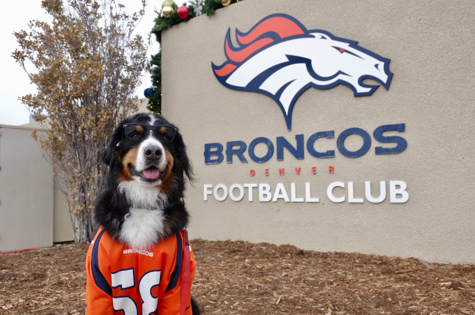 Toby the Bernese Mountain Dog visits Denver Broncos (Courtesy: Dustin Schaefer)