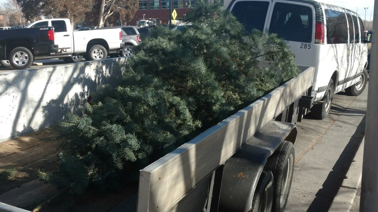 Providence Curbside Pick-Up of Christmas Trees Begins Monday