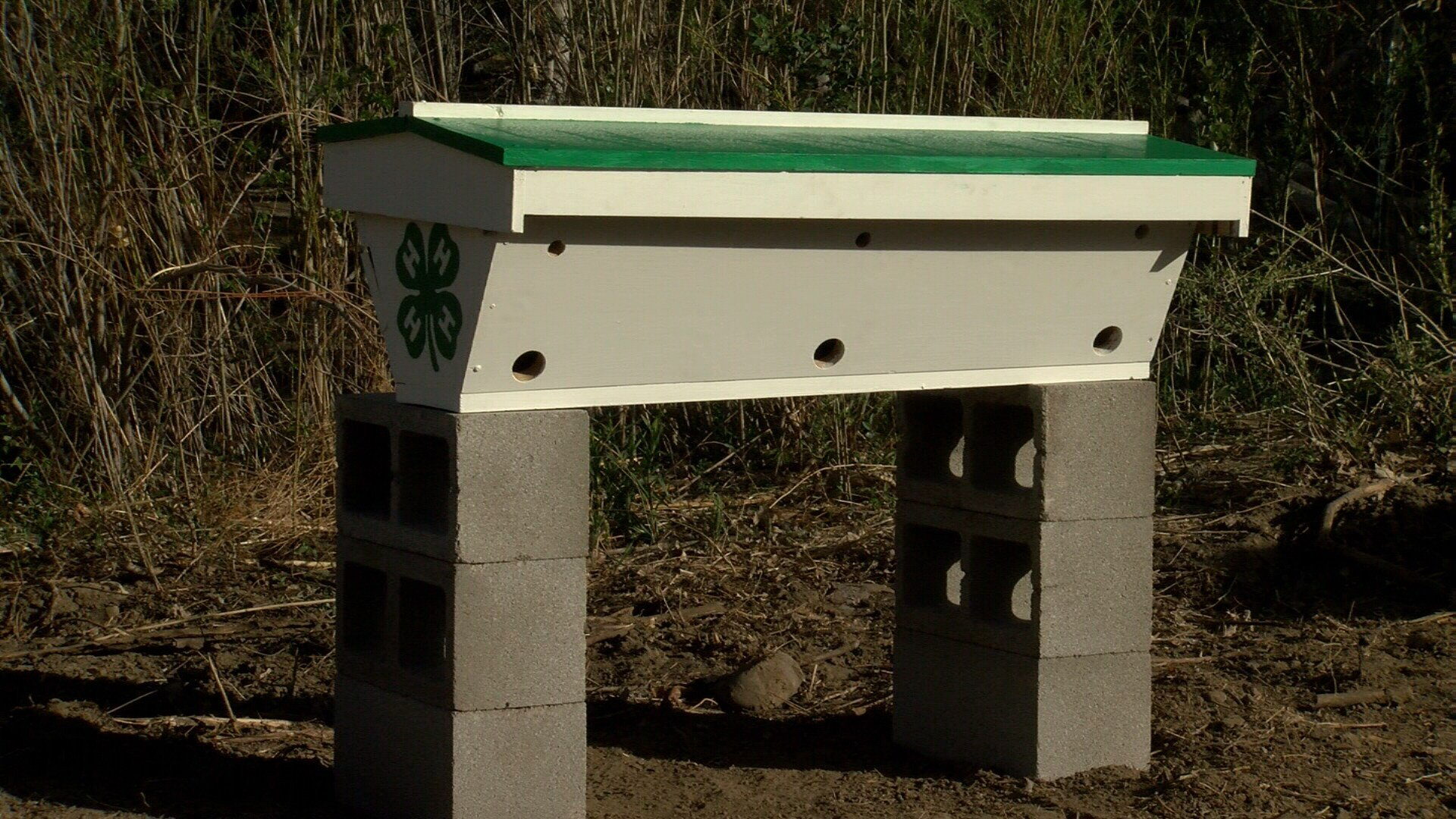 Smart hive at Pueblo Zoo
