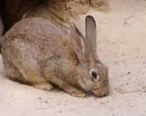 A wild rabbit found in Pueblo West has tested positive for tularemia