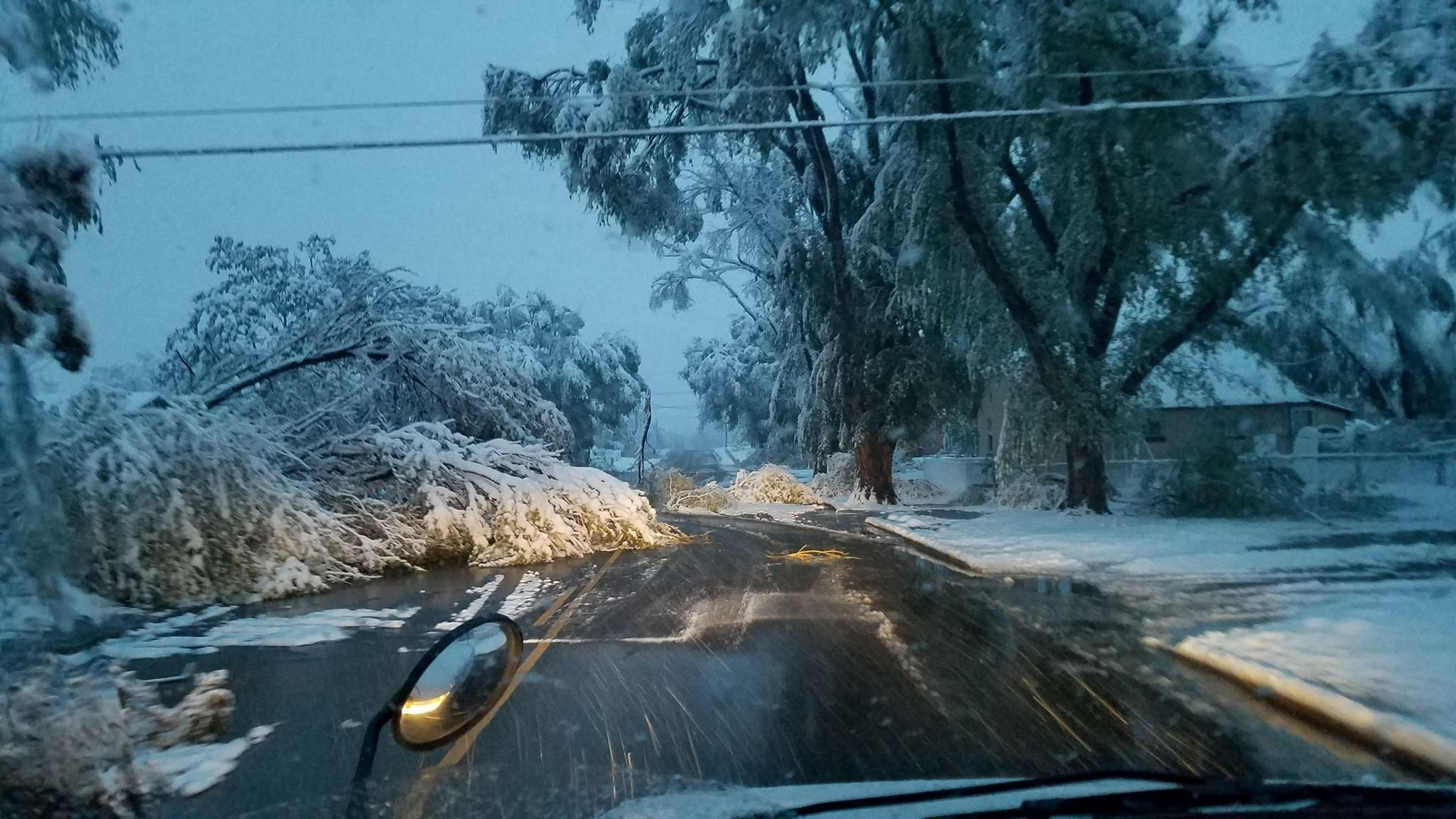 Tree knocked down by heavy snow along Jones Avenue in Pueblo. Photo by Eva Arnim