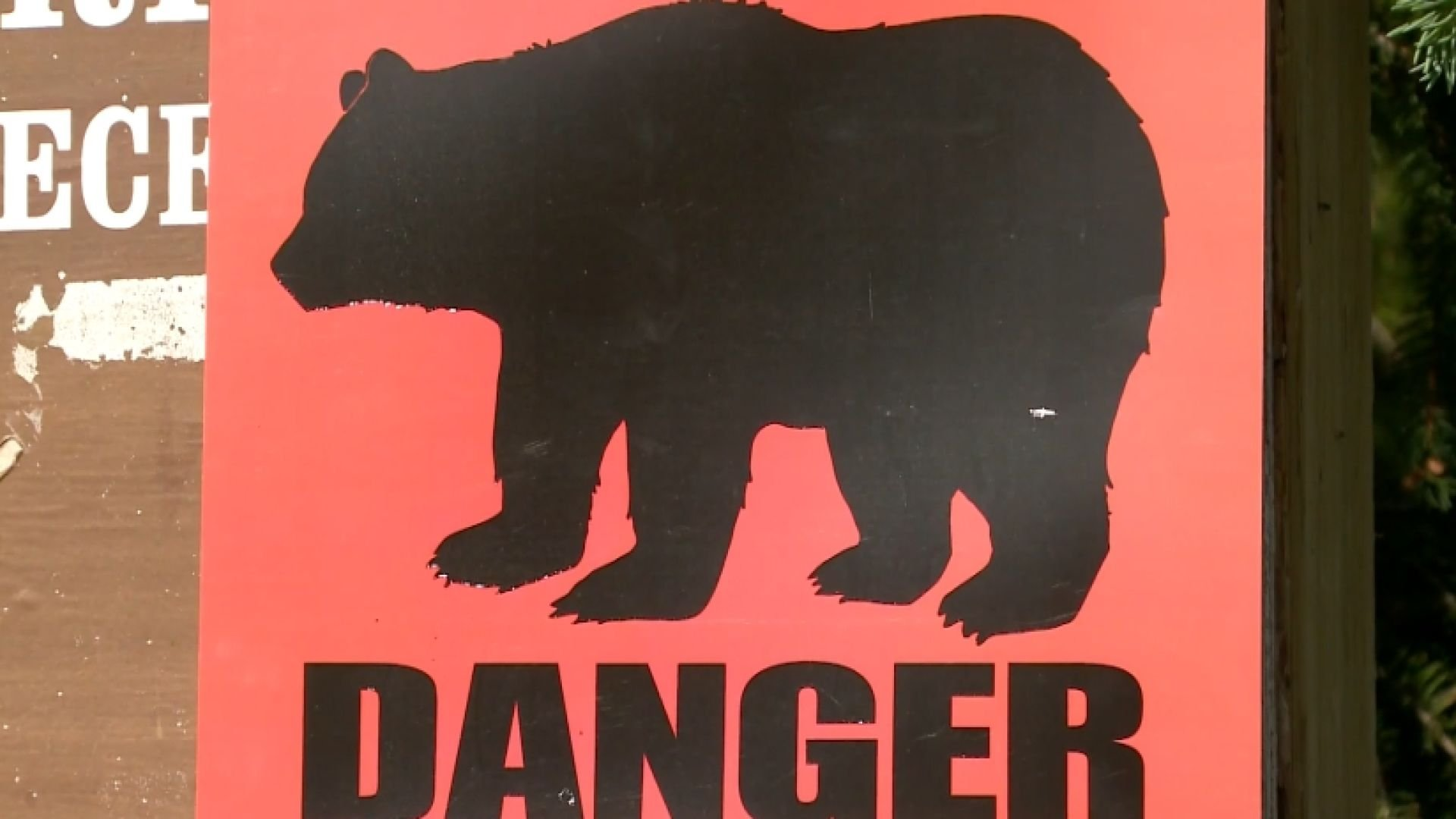 A teen taking part in a race was mauled to death by a black bear in Alaska.