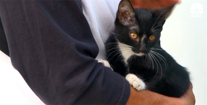 Little Vegas the cat was missing for four days before her owner found her inside the dashboard in his van.