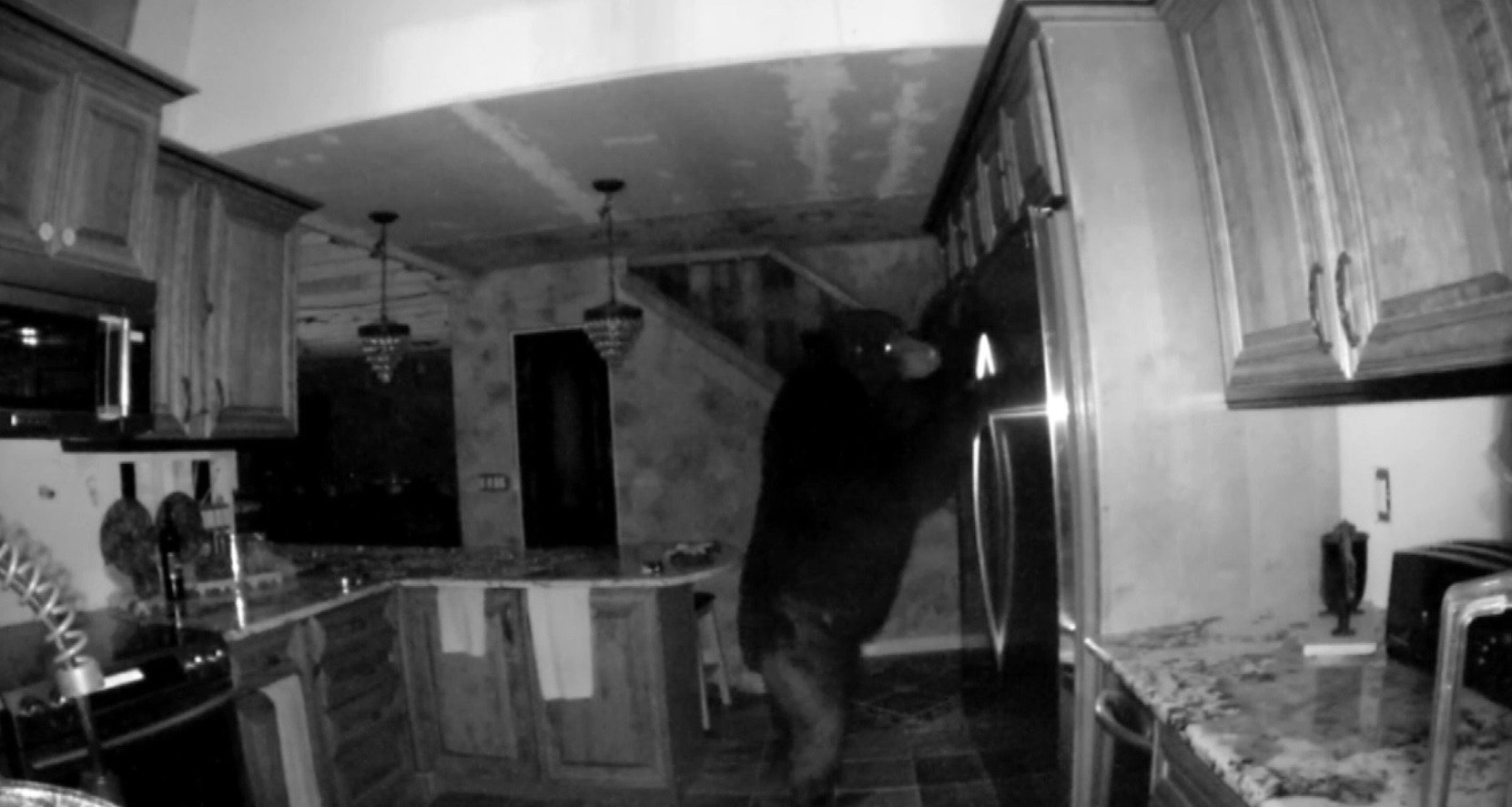 A surveillance camera captured a bear break into a home and open the fridge to have a snack on July 4, 2017
