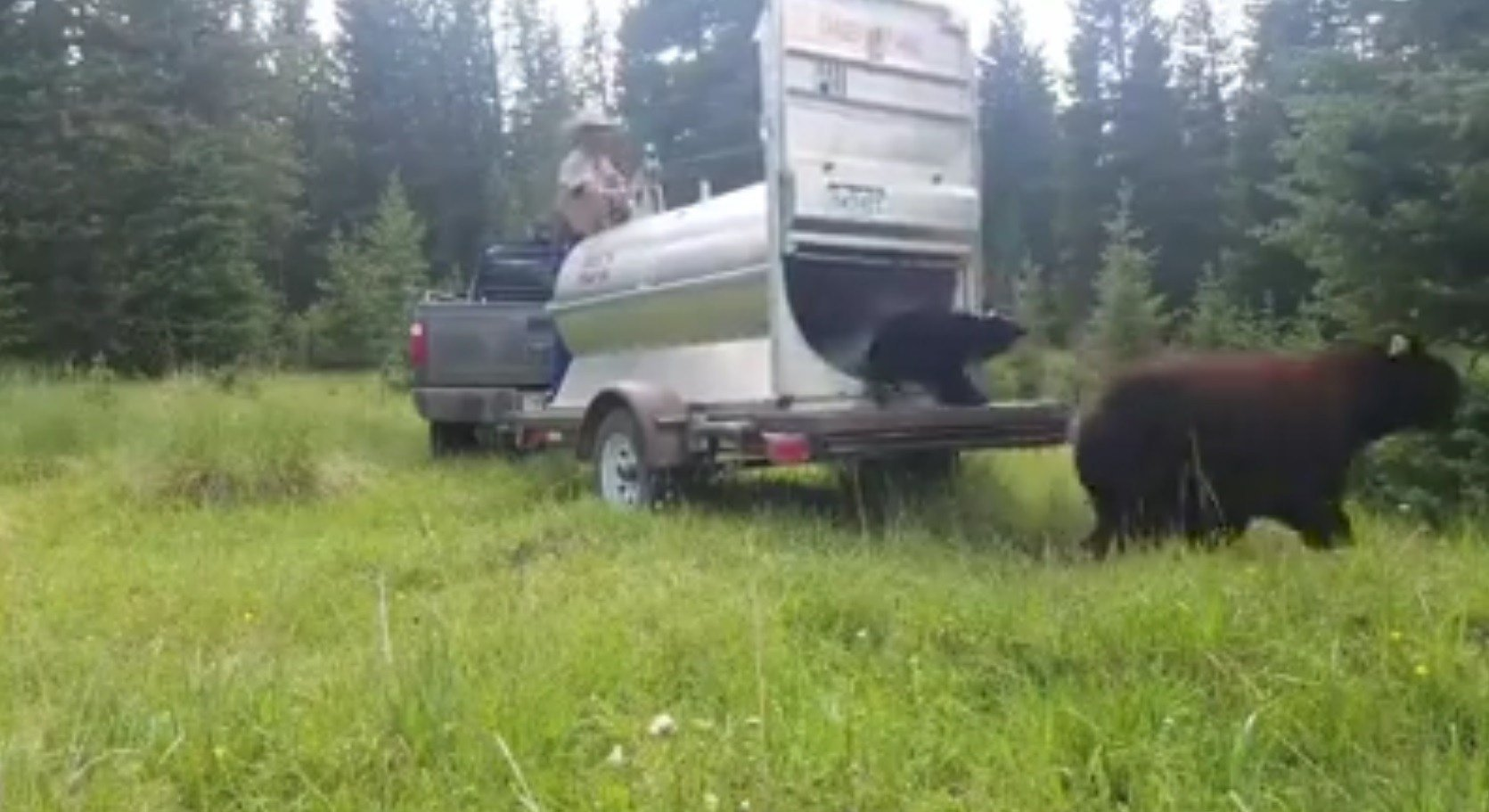 Colorado Parks and Wildlife officers release a bear and her three cubs on July 18, 2017.