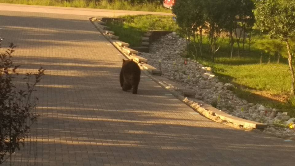 A KOAA employee spotted a bear walking in their neighbor's driveway in Monument. (KOAA)