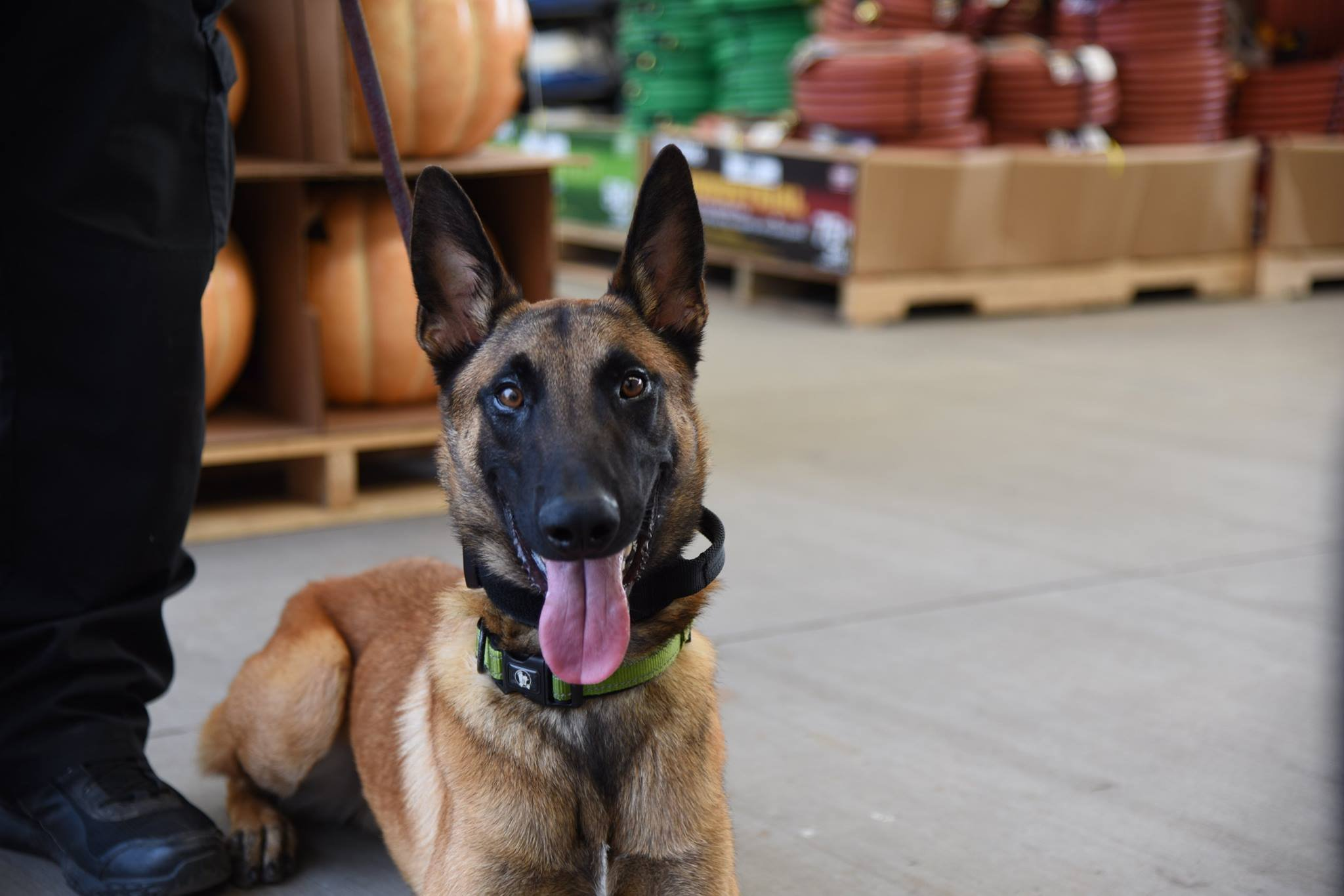 Help name the newest member of the K9 team.