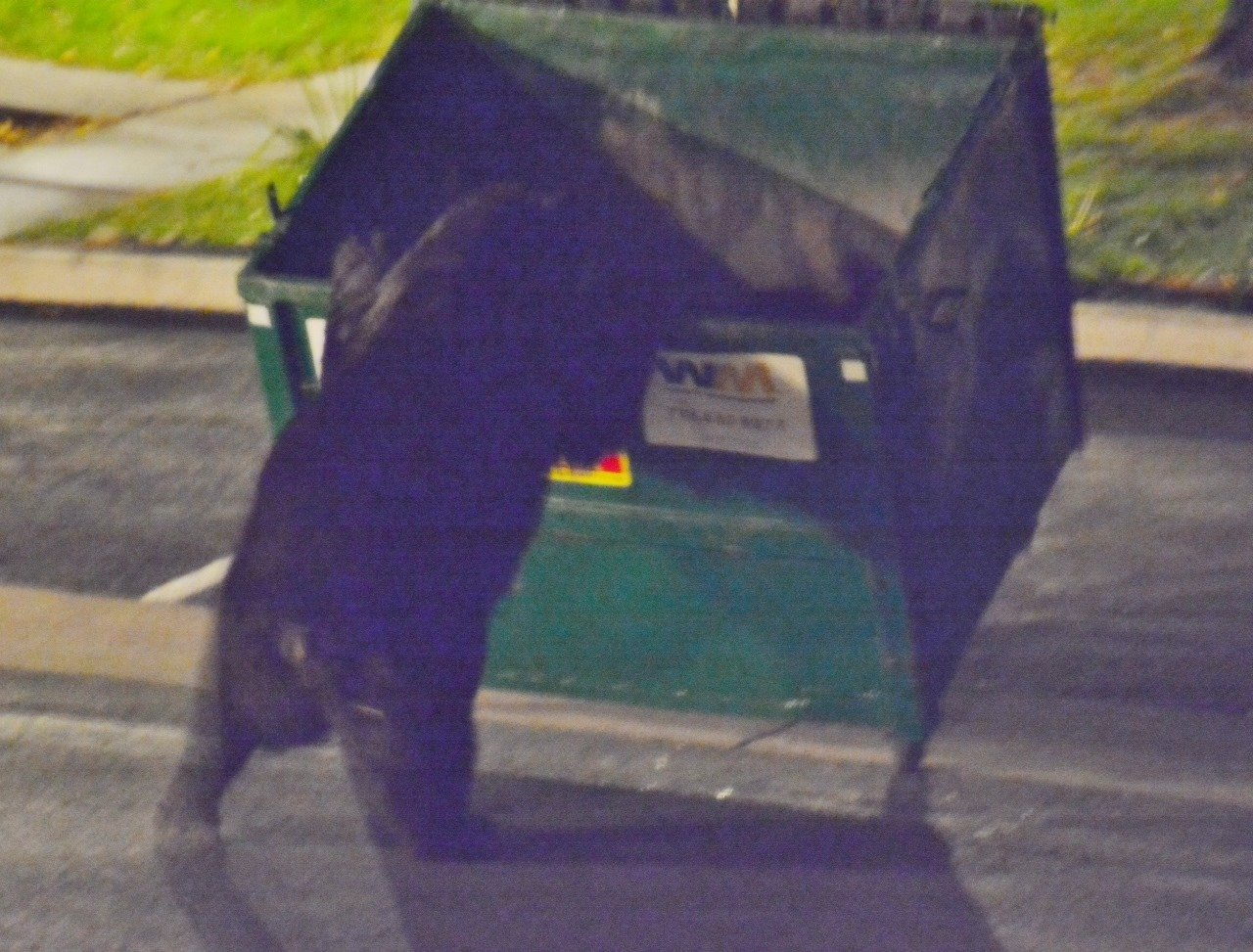 Bear spotted in dumpster in Colorado Springs overnight Thursday.