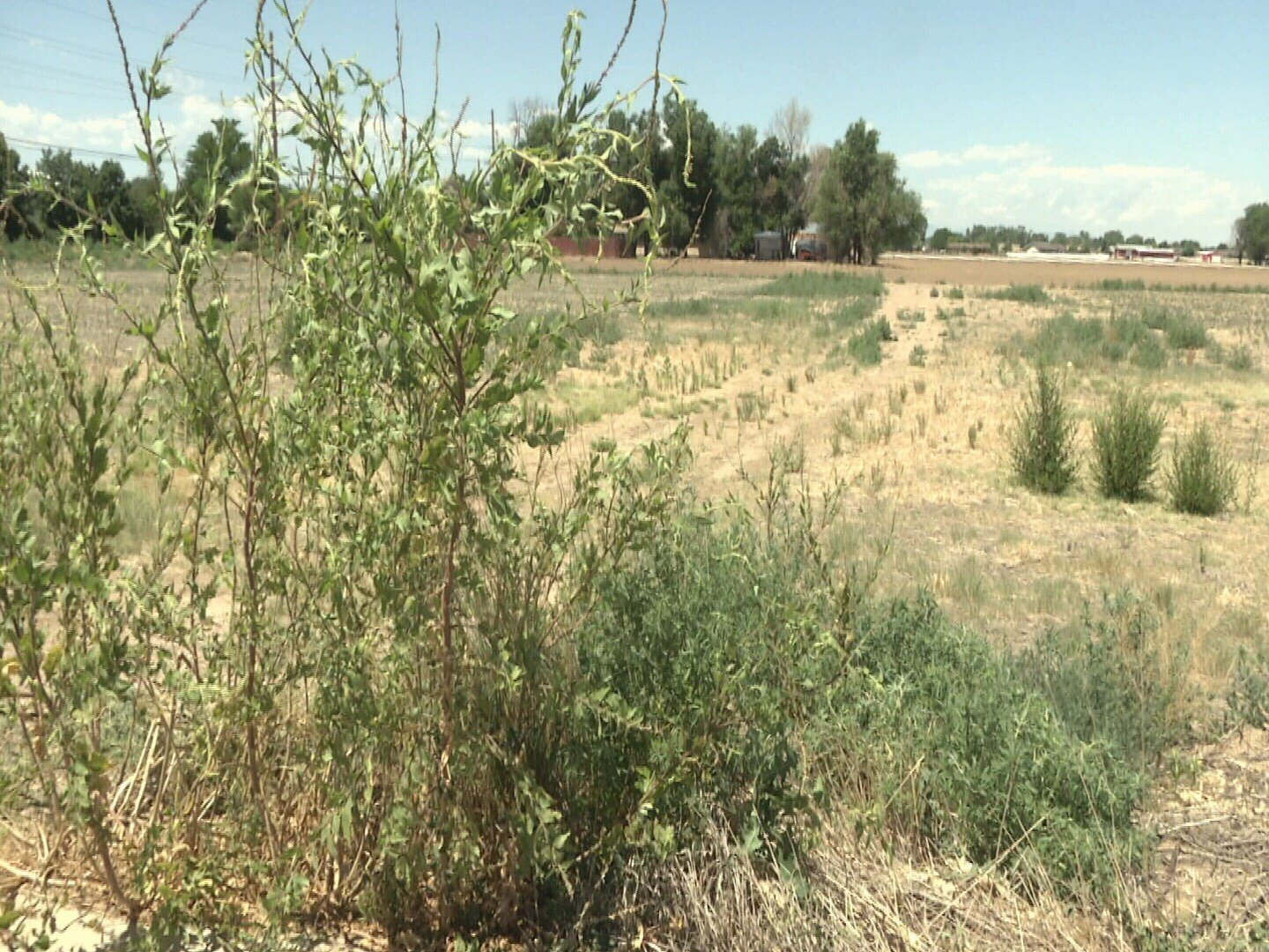 Pueblo County Commissioners are considering an ordinance requiring land owners in unincorporated parts of the County to remove any weeds or brush that are greater than 9 inches tall
