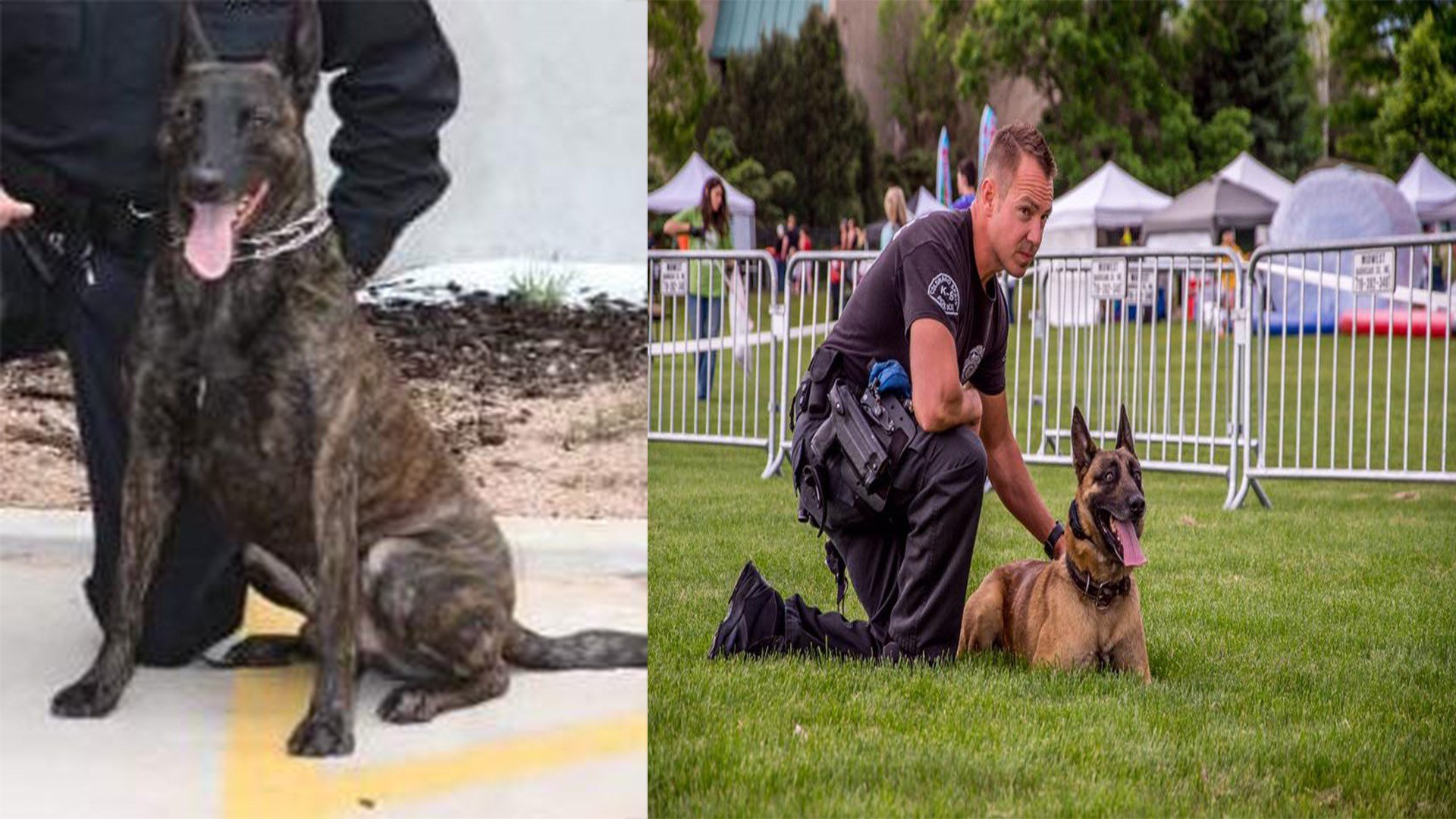 (Photo Courtesy: Colorado Springs K-9 Unit)
