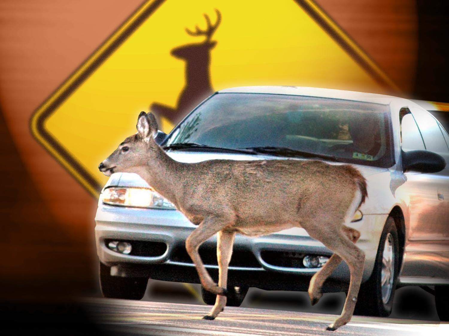 Department of transportation removes several wildlife speed zones across the state.