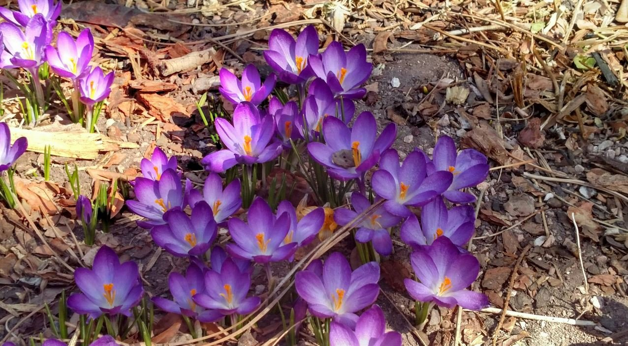 Time for winter watering koaa continuous news colorado flowers bloom early as winter season continues in colorado springs koaa dhlflorist Choice Image