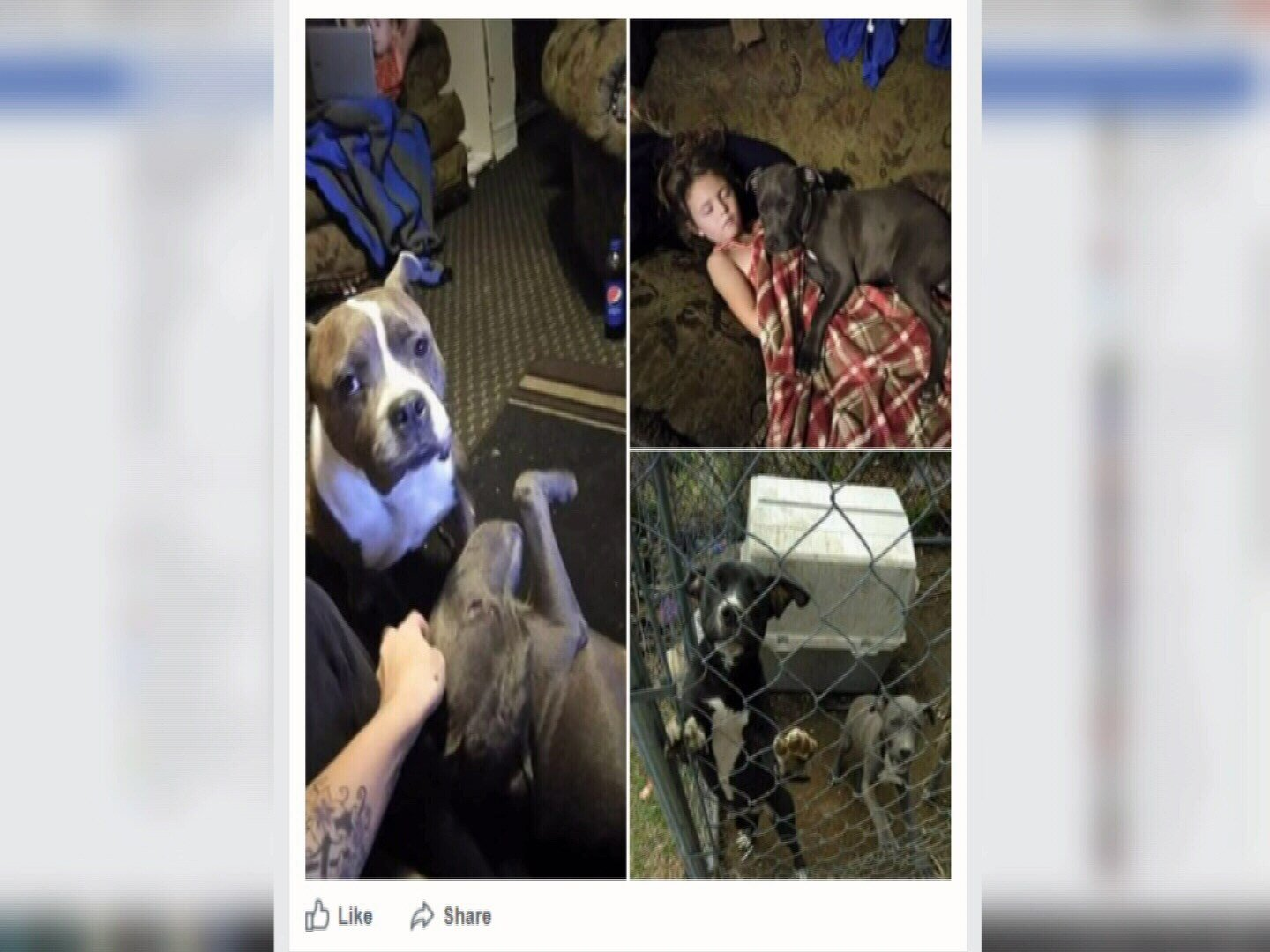 dogs stolen from backyard and one sold dog owner says koaa com